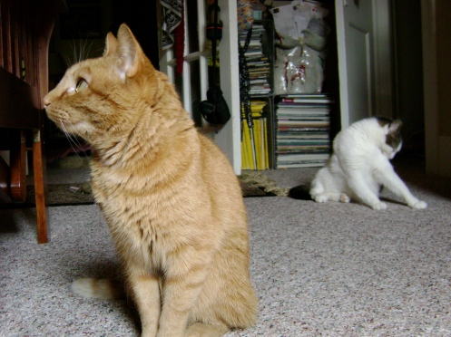 Marmalade and Maggie pre-occupied in Norman, Oklahoma